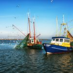 La importancia de la industria pesquera en España
